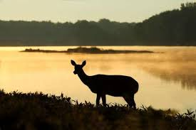 Dusk Or Dawn Whats The Best Time Of Day To Hunt Deer