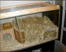 the digging area gerbil toys hamster
