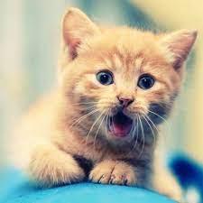 Top 30 cat wallpaper for tablet (HD ...