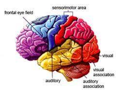 <b>Hearing Aids</b>: The Key to Healthy Brain Function