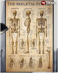 Laminated Anatomical Charts Human Skeleton Skeletal System Laminated Anatomical Chart