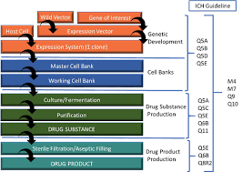 Biopharmaceutical Manufacturing Process Flow Chart Considerations For Biologic Drug Substance And Drug Product