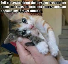 Cute cat meme | Animals | Pinterest | Kitty, Cat Memes and Cute Cats via Relatably.com