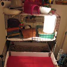 How To Clean A Guinea Pig S Cage Fast And Easy Pethelpful