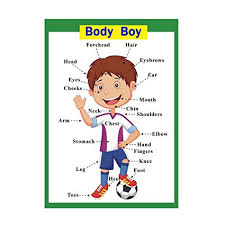 Body Part Chart For Toddlers B Blesiya Learning Wall Charts Posters Fun Educational Activity For Home Or School Body Boy