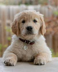 Puppy Wallpapers: Free HD Download ...