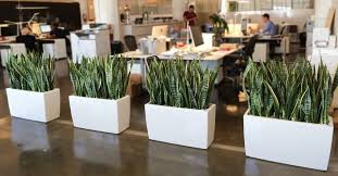office cubicle plants. Would Say The Office Cubicle Has Just Become A Much Nicer Place To Work. Here Are Few Of Benefits Going Green In Office: Indoor Plants