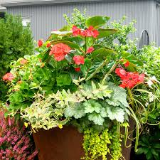 our container gardening services in seattle assure aesthetics and knowledge come together to create lovely container gardens