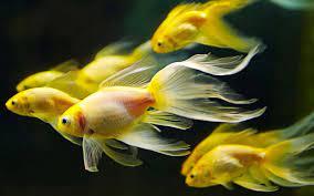 3d Fish Wallpapers - Wallpaper Cave