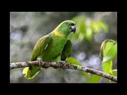 essay on parrot in hindi  essay on parrot in hindi