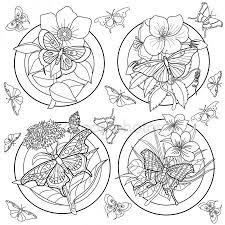 Kleurplaat Vlinders Stockvectors Rechtenvrije Kleurplaat Vlinders