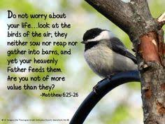 Image result for Matthew 6:26