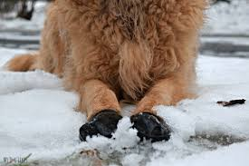 pawz dog boots review maximum winter protection
