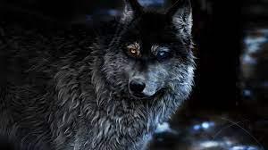 Wolf 4k Wallpapers, Ultra HD Animal ...