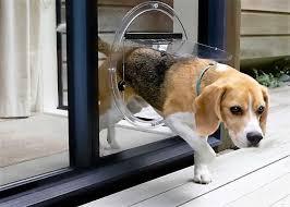 dog door installation for glass