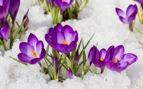 Image result for цветы в начале февраля