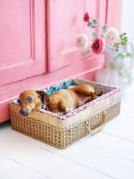 Diy Dog Bed 14 Adorable Diy Dog Bed Cheap Pet Beds