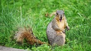 natural ways to repel squirrels from the garden using spices