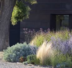 Small Picture Hotel in the environs of Asti ornamental grasses and sage