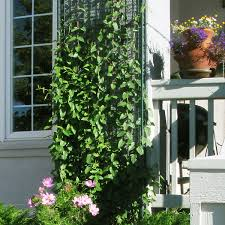 greenscreen trellis panels are mounted off of the building surface to prevent damage by the