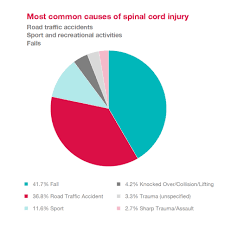 What Is Spinal Cord Injury Spinal Research