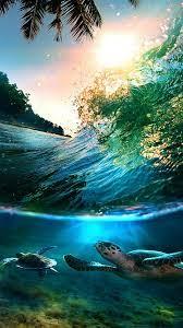 44+] Sea Turtle iPhone Wallpaper on ...