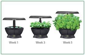 aero garden com.  Aero The AeroGarden Classic 6 Grows Plants 5 Times Faster Than Grown  Indoors In High Quality Potting Soil Fully Adjustable Lamp Arm Has A 12 To Aero Garden Com O