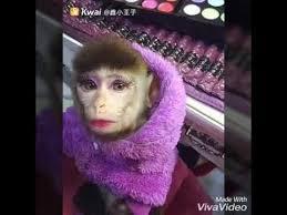 monkey makeup face