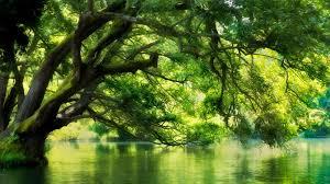⭐️ Cảnh Đẹp Mùa Xuân Trên Thế Giới ⭐️ Images?q=tbn:ANd9GcQ4KSAWnZgpbPSYHsm6gHg-iDW04grky1DjBI409Tp39a0YZHNb