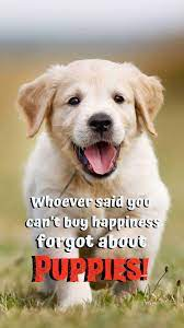 Puppy quotes, Cute dog quotes ...