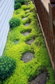 Best 25+ Ground cover plants ideas on Pinterest | Flowering ground ...