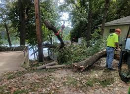 Tree Risk Assessment In Kalamazoo Mi Arborists At