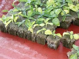 consider hydroponic flower gardening