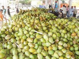 Fresh Coconut Retail Business