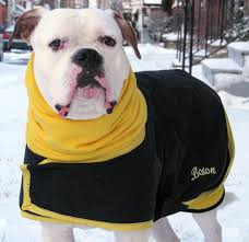 warm winter coats for dogs photo 2