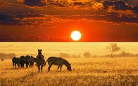 african animals wallpaper high resolution.  Resolution For African Animals Wallpaper High Resolution A