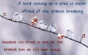 Image result for a bird sitting on a branch is not afraid