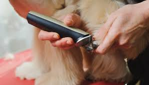 the best cordless pet clippers for dogs
