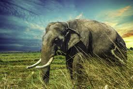 1366x768 Thailand Elephant 5k 1366x768 ...