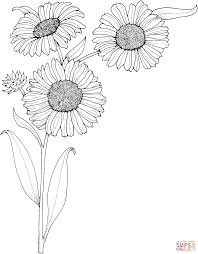 Small Picture Realistic Sunflowers coloring page Free Printable Coloring Pages