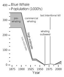 File Blue Whale Population V1 Svg Wikipedia