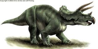 Image result for ceratopsians'
