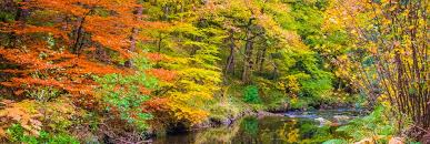 Image result for Photos of woods in autumn