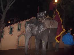 Image result for elephant at night jaipur