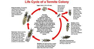 harbor pest control. Plain Control Termite Treatment Pest Control In And Near Palm Harbor Florida And P