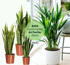office plants no light. Indoor Office Plants Air Purifier Shop Online Best For Low Light . No