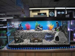 Fish Tank Accessories And Decorations