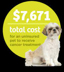As insurance companies adjust their policies to better fit client needs and the veterinary is there an option for alternative therapies? Pets Best Pet Insurance Pet Health Insurance For Dogs Cats