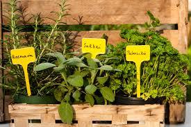 Säge zwei bretter mit einer höhe von 15 x 100 cm zu, bei dem dritten brett ziehst du von der höhe die dicke der holzplatte ab, damit du am ende. Krautertreppe Selber Bauen Und Optimal Bepflanzen