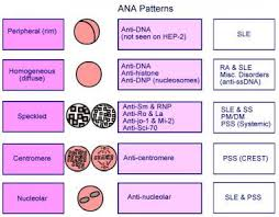 Ana Pattern Homogeneous New Antinuclear Antibody Reference Range Interpretation Collection